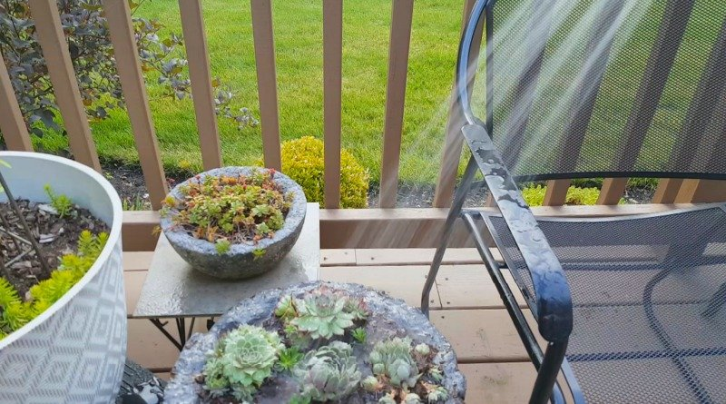 image of hypertufa bowl being watered with garden hose
