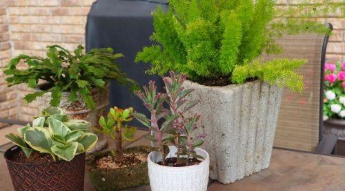 8 Ways To Kill Fungus Gnats In My Houseplants