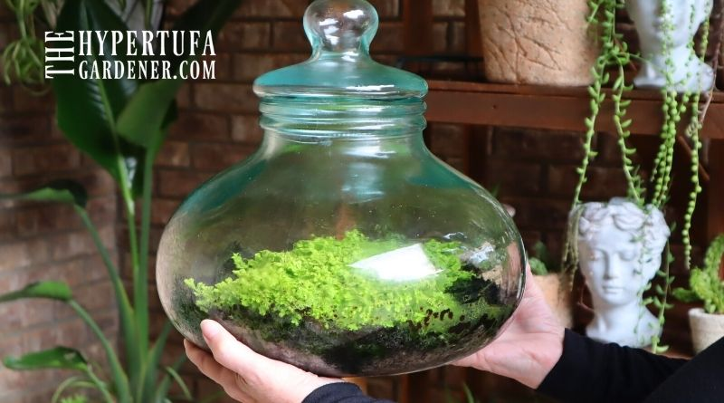 image of hands holding up a large jar terrarium