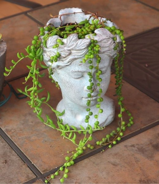 image of head vase planted with String of Pearls