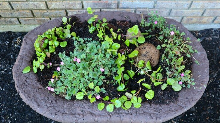 image of full view large hypertufa planter with ivy and erodium