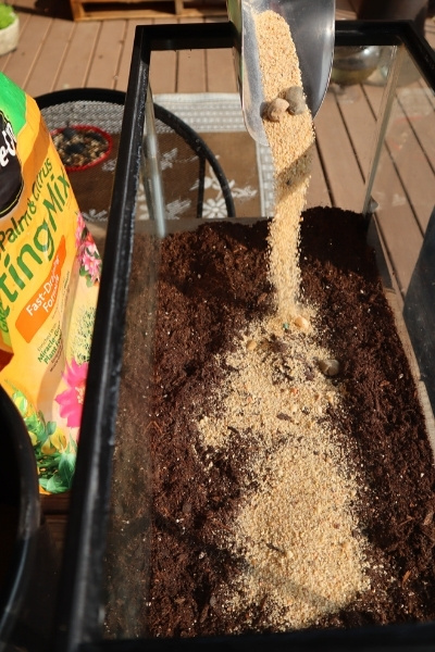 Sand pouring from scoop into the terrarium soil