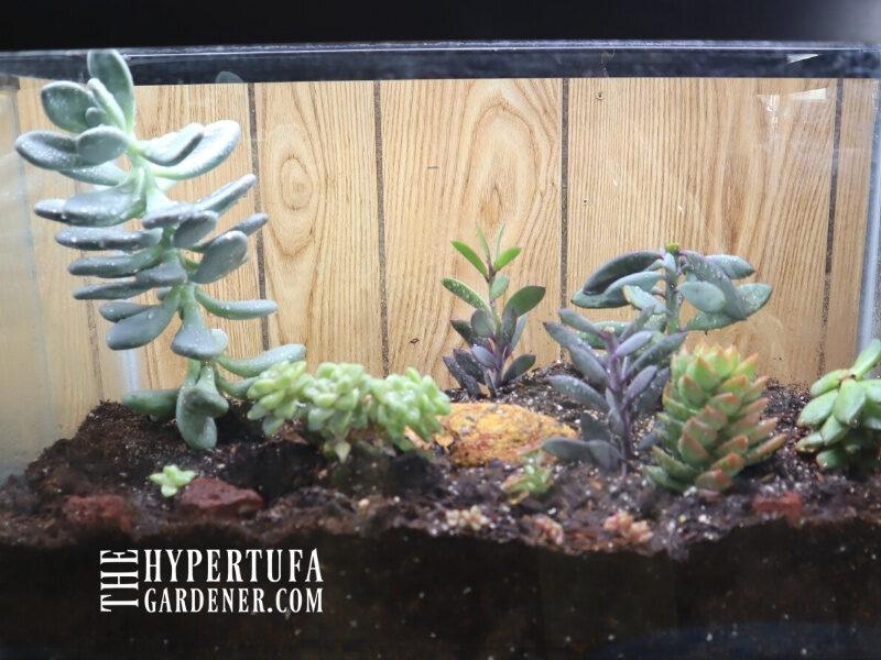 image of finished planted aquarium terrarium
