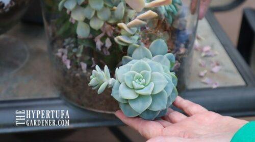 I'm Planting My Succulent Aquarium Terrarium