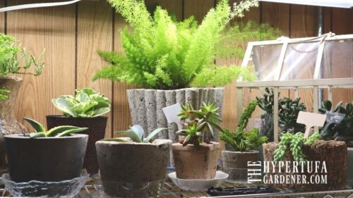 Overwintering Houseplants In My Basement