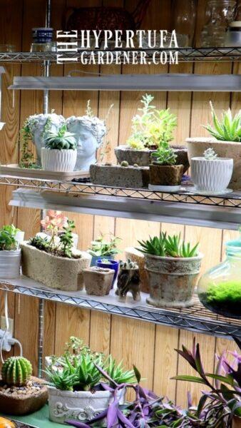 image of my houseplants on grow light shelves in my basement