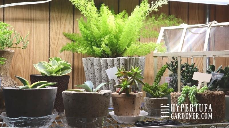 image of houseplants in hypertufa under grow lights