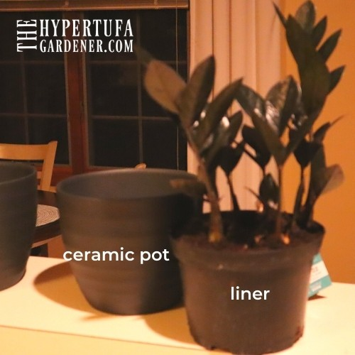 ZZ  plant with cloche pot and liner