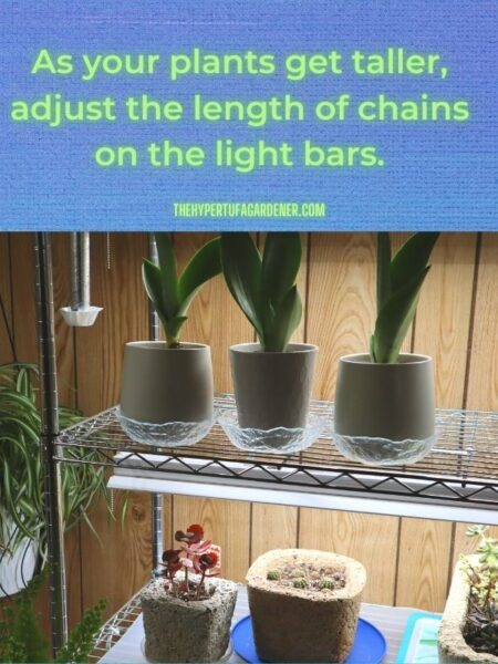 image of 3 potted Moonshine Sansevieria plants under grow lights
