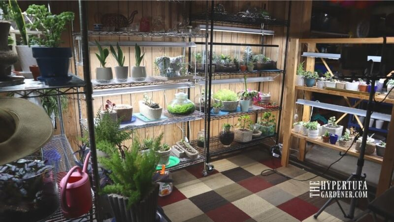 image of all four growing shelves with their grow lights