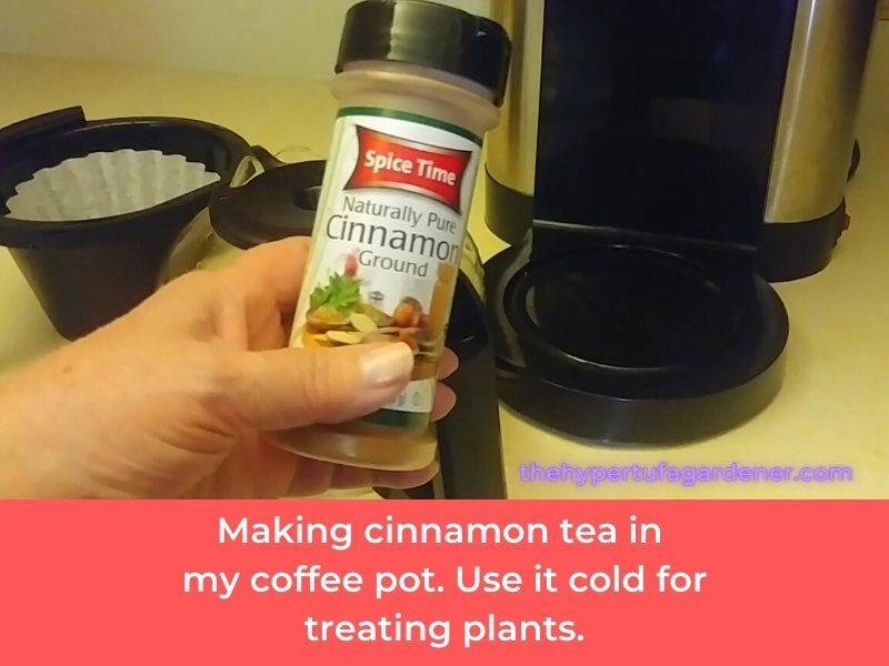 image of my coffee pot making cinnamon tea for use on plants