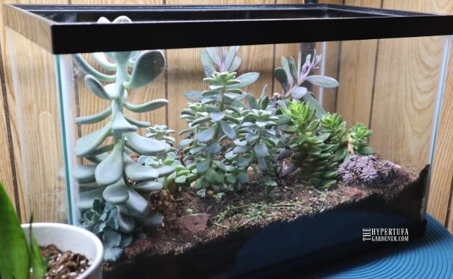 image of one of my succulent aquarium converted to terrarium