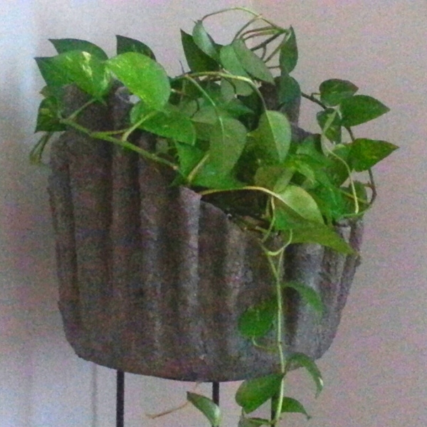 image of houseplant pothos in hypertufa draped planter