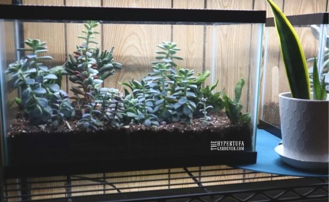 another image of one of my succulent aquarium converted to terrarium