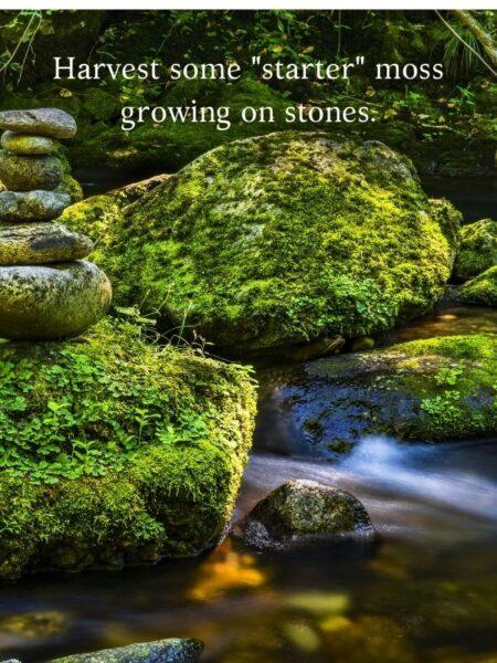 moss growing on stones