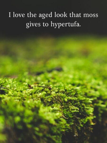 Moss makes hypertufa look ancient