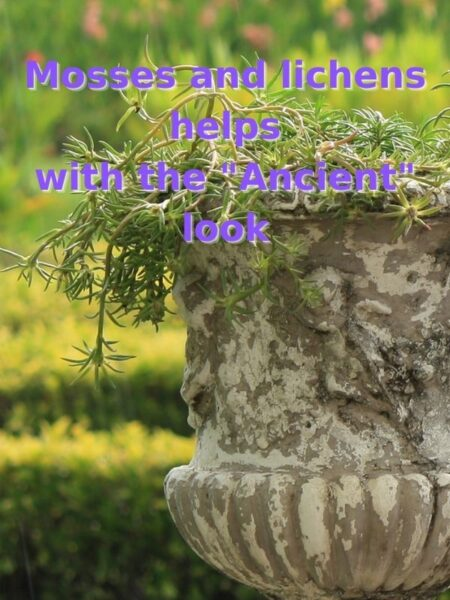 old stone urn with succulents and lots of moss and lichens