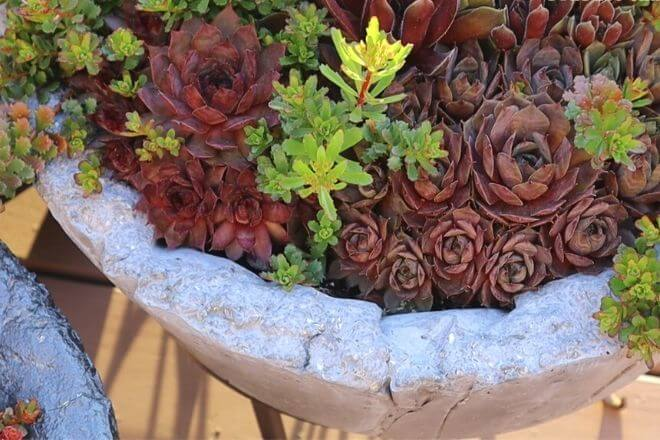 hypertufa pot with succulents