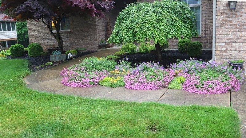 flowers blooming in front garden