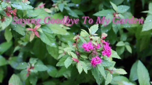Saying Goodbye To My Garden