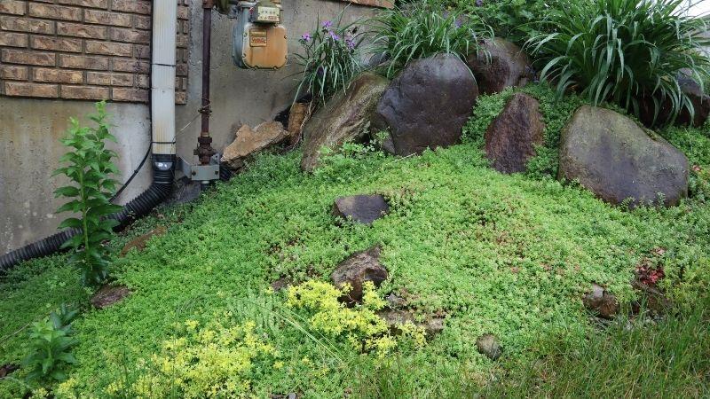 hillside boulder garden with sedum