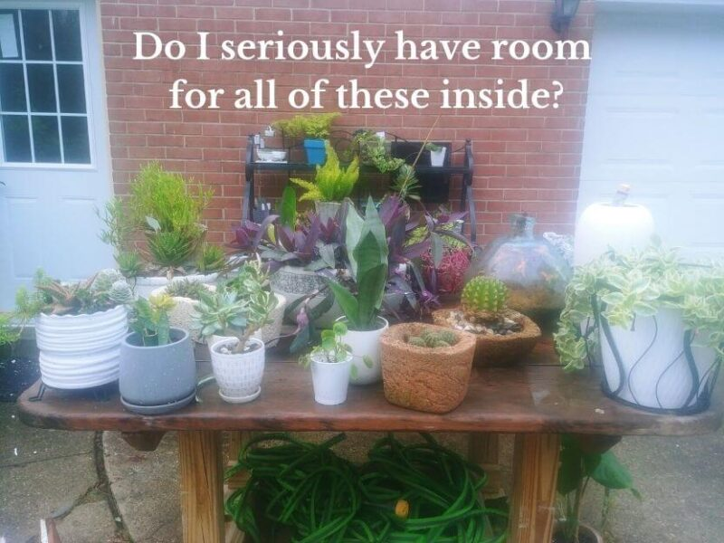 potting tables full of tender plants to find a place for in my new home