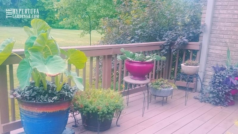 Various plants on a summer deck
