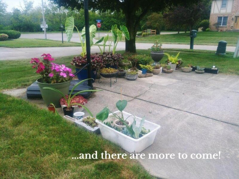 plants all lined up on turn-around driveway pad